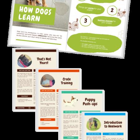 puppy training online mock